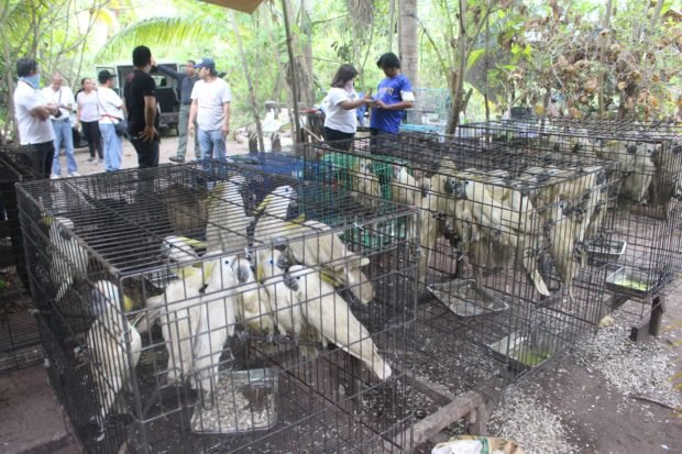 PH losing P50B a year to illegal wildlife trade